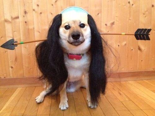 【画像】犬に落ち武者のコスプレをさせたら予想以上だった