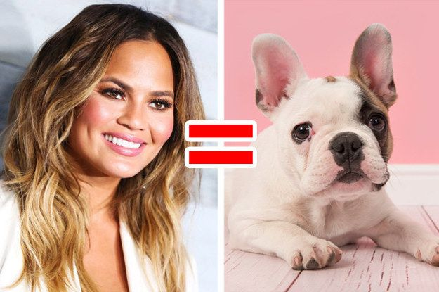 Which Small Dog Breed Matches Your Personality Big Dog Breeds Dog Quizzes Dog Quiz