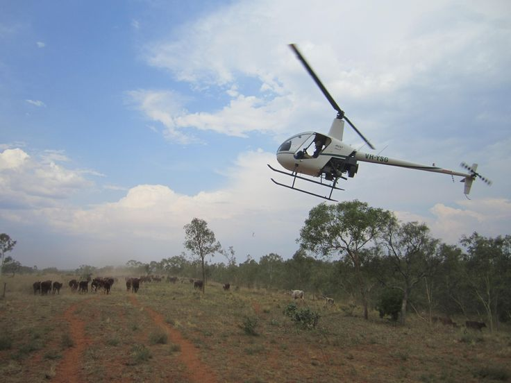 Cattle Muster, NT Australia