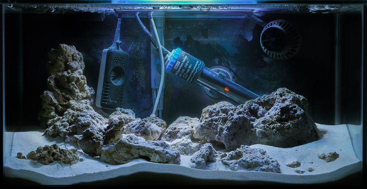 81 best fluval edge pico reef build images on pinterest for Cycling a fish tank