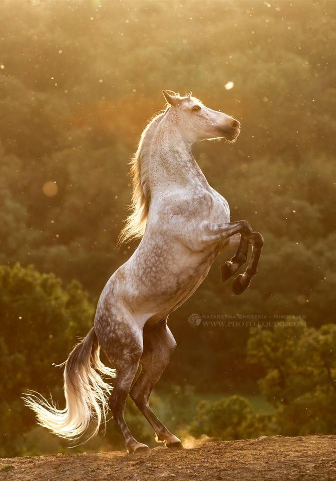 Pin Von Anna Golon Auf Konie Tiere Pferde Schone Pferde