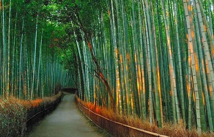 бамбуковая роща Саган