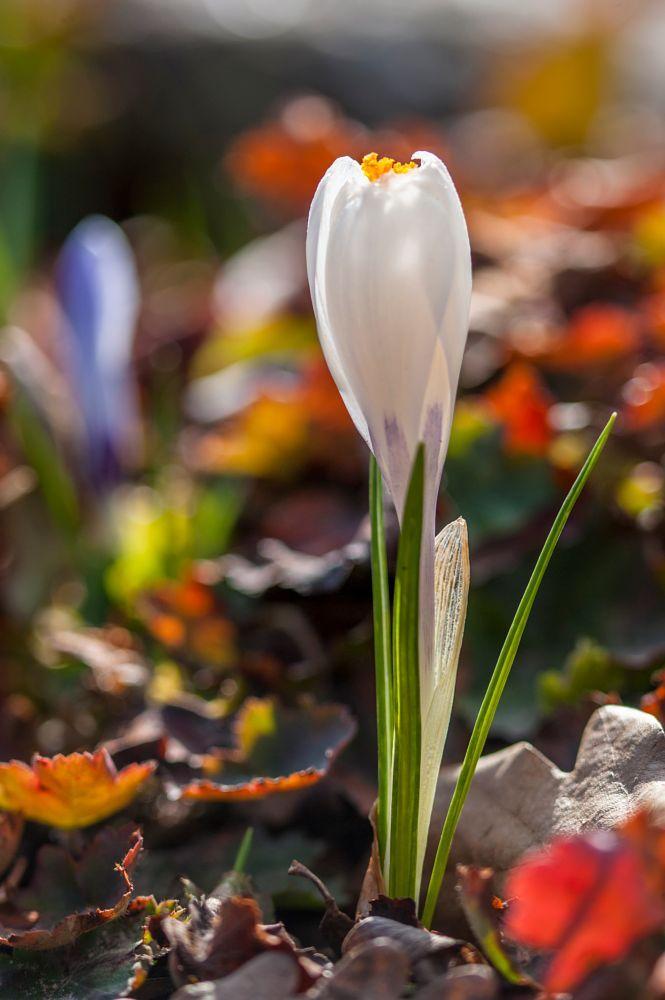 Spring Colours - Kevään värejä by Pauliina Kuikka