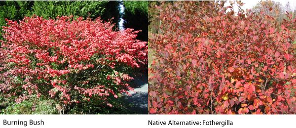 12 best top 10 native plants for fall in nw arkansas images on pinterest