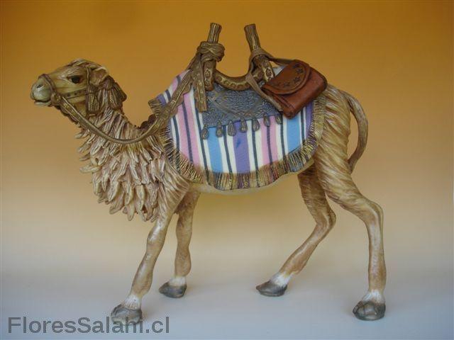 Camello. | Flores Salahi