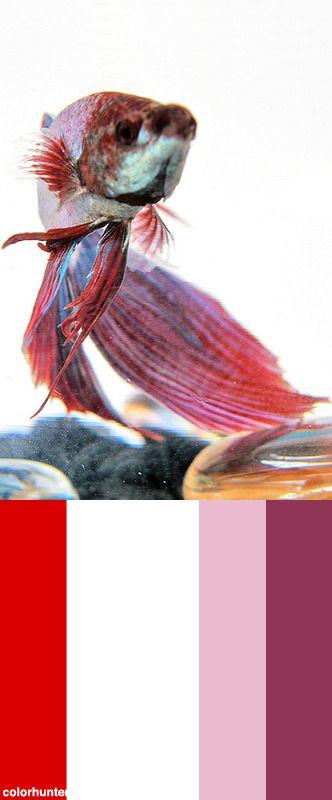Red,+White+&+Blue+Fighter+Color+Scheme