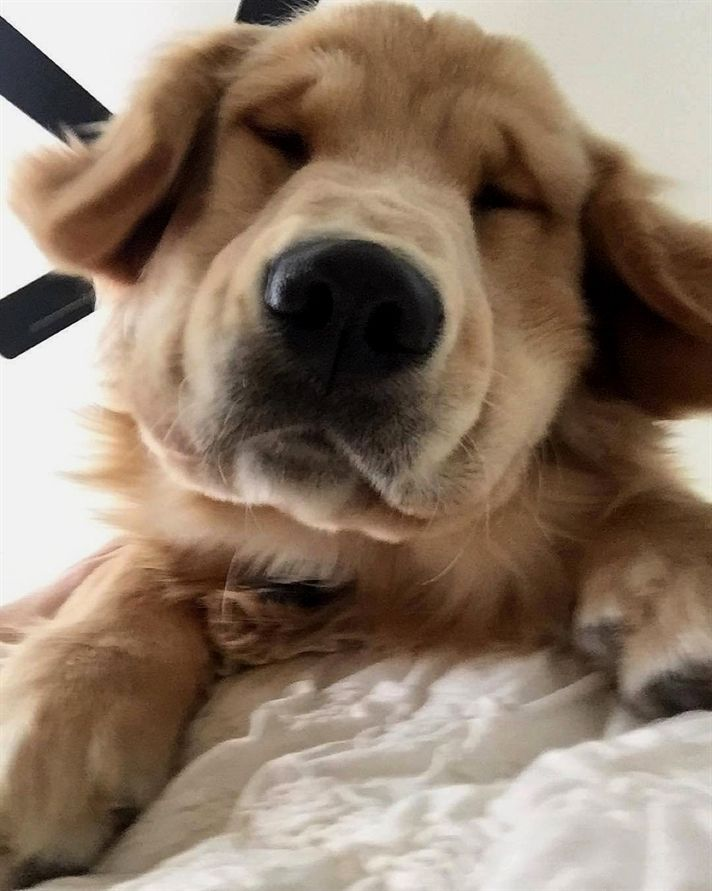 Pin On Dog Videos
