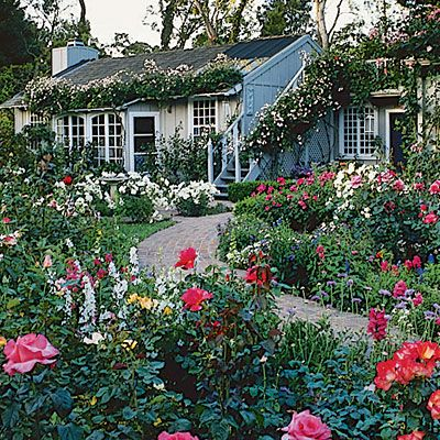 Guide to cottage gardening Gardens Shrub roses and