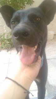 Χάθηκε σκυλάκος στην περιοχή της Νέας Ιωνίας στην Αλσουπολη