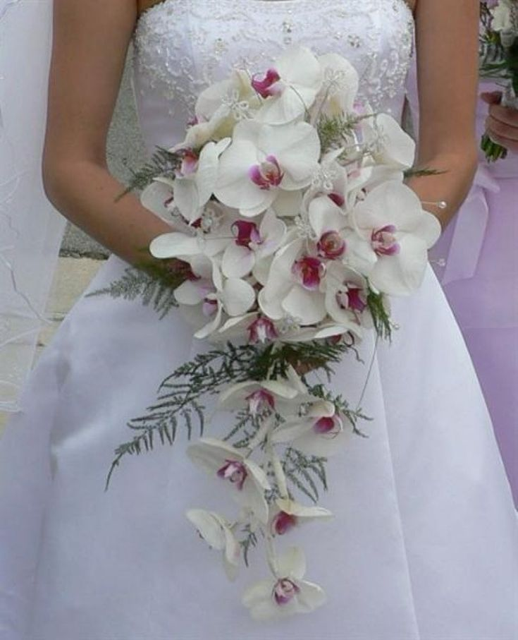 Las orquídeas más cultivadas como plantas de interior debido a su sencillez de cultivo y a la espectacularidad de sus flores.