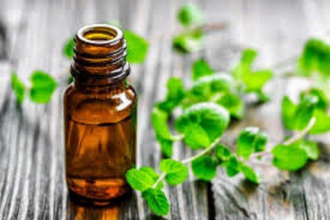 Óleo caseiro de hortelã: ótimo tratamento para enxaqueca, dor de cabeça, gripe e resfriado | Cura pela Natureza