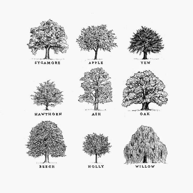 Rose semplici la forma degli alberi disegni quercia