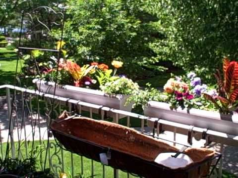 Phase 1 of my Balcony Oasis is now planted and the 3 window boxes are hung outside the railings.  I used standard railing aluminum holders available at nursery shop.  Outside the railing gives a great view to the common area for the public and allows more room on your balcony, patio or deck.   As you see underneath these boxes, on the left, is m...