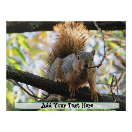 Personalized Cute Squirrel Humor Poster - photography gifts diy custom unique special