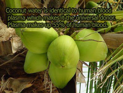 robert von rotz roy: Alternative medicine Coconut - holistic treatment ...