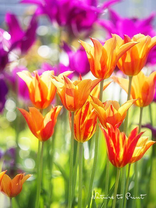 Die 25+ Besten Ideen Zu Blumenbeet Gestalten Auf Pinterest ... Blumenbeet Anlegen Teppichbeet Tipps