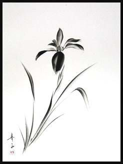 245.Iris16x20large.jpg (246×329)