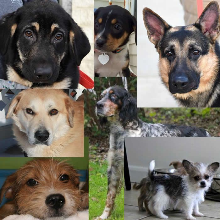 Dogs for adoption or sale in Ohio http//www.doggielife