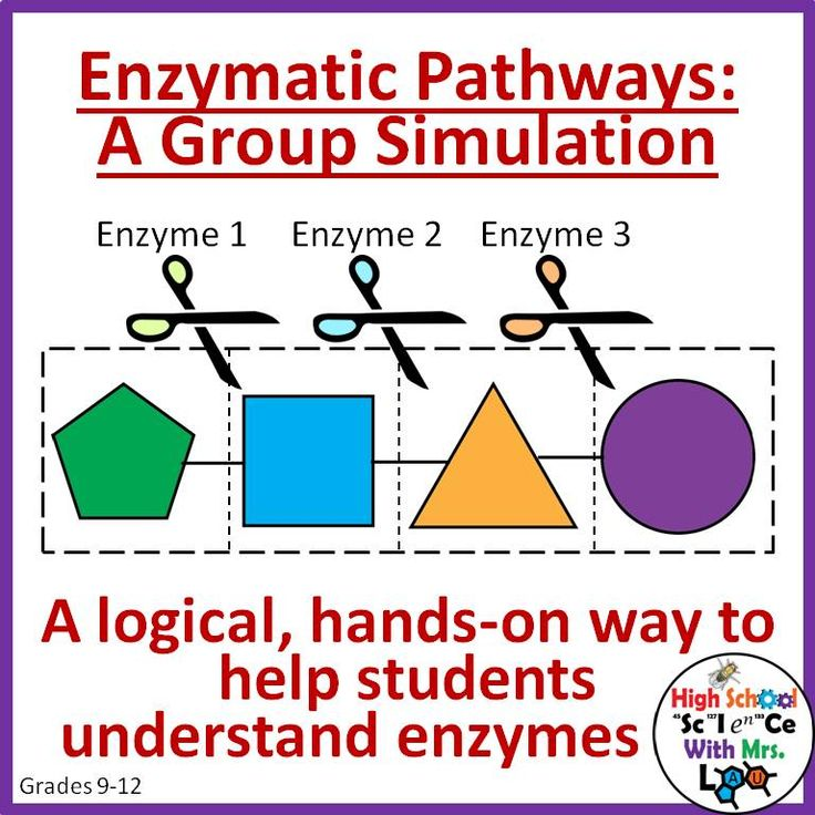 Enzymes and Pathways: A Group Simulation Paper Lab. A great hands-on activity to help students understand how enzymes work together in a cell.