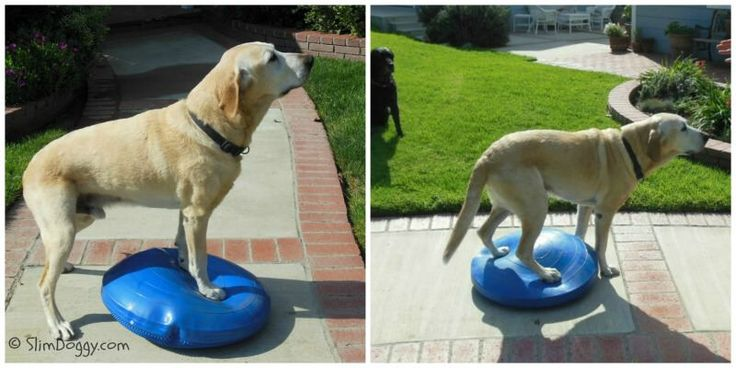 Benefits of Balance Training Your Dog | SlimDoggy