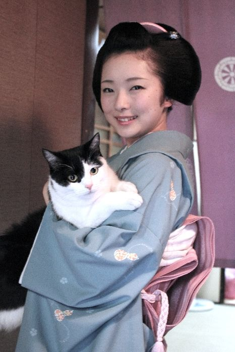 KittyToshimana (Miyagawa-cho) as a maiko with an adorable cat! Toshimana is currently a jimae geiko. Jimae geiko are those who have paid all their debts and are currently living independently, as opposed to an okiya