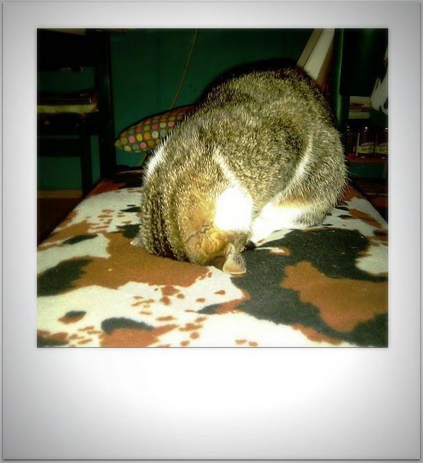 Teresa having a nap on her head...