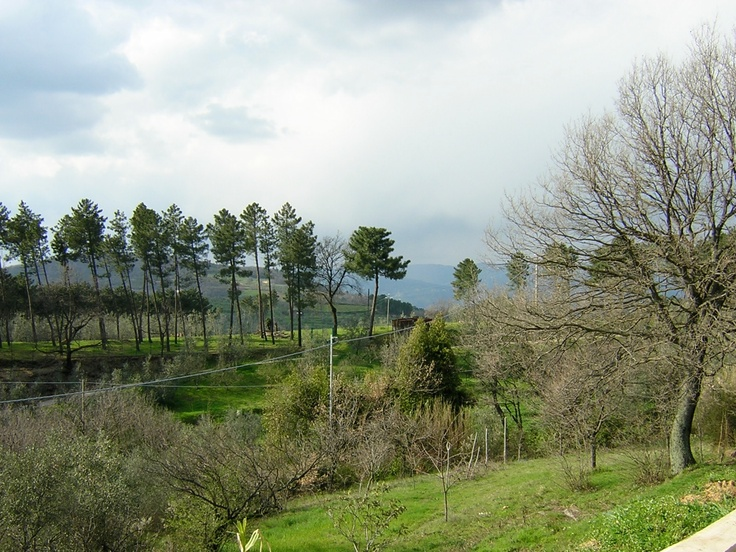 View from the balcony, including some of our land.  Villa tina is in tuscany and for rent!