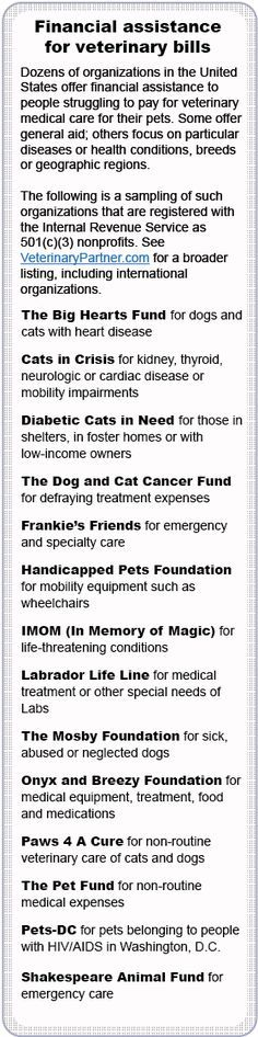 Help exists for those struggling to pay vet bills! Please don't give up if you don't have the funds necessary.