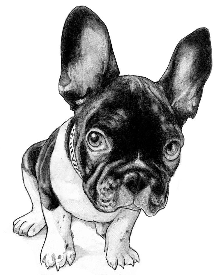 French Bulldog Cartoons French Bulldog Sketch Cute
