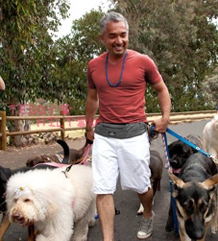 How To Crate Train A Dog Cesar Millan
