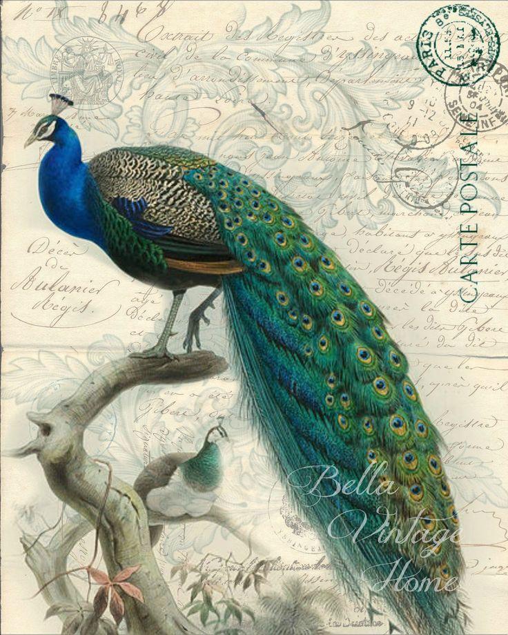 1000  ideas about peacock artwork on pinterest