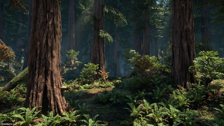 Redwood Forest UE4, Simon Barle on ArtStation at https://www.artstation.com/artwork/2LqeA