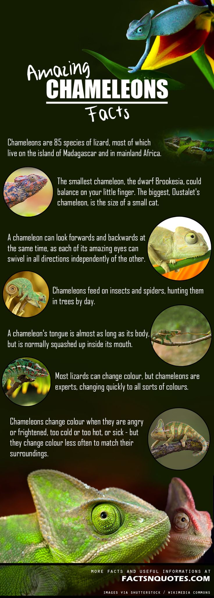 25 amazing chameleon pictures - Amazing And Interesting Chameleons Facts You Didn T Know
