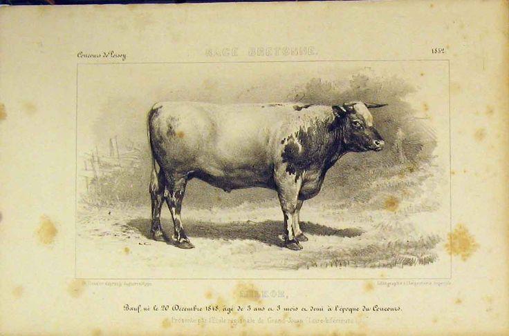 нем картинки для декупажа монохром корова простая кровать