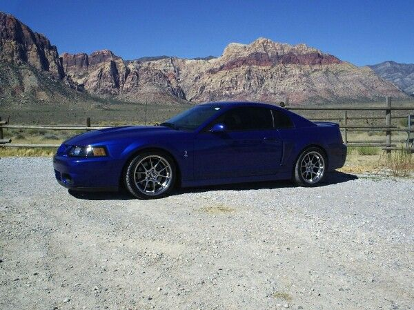 Terminator Cobra Colors