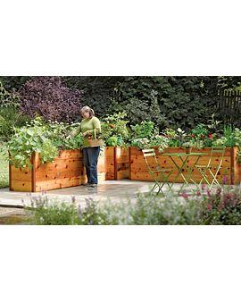 Standing height garden - perfectGardens Ideas, Gardens Boxes, Rai Beds Gardens, Cedar Raised, Raised Beds, Raised Gardens Beds, Elevator Cedar, Rai Gardens Beds, Raised Garden Beds