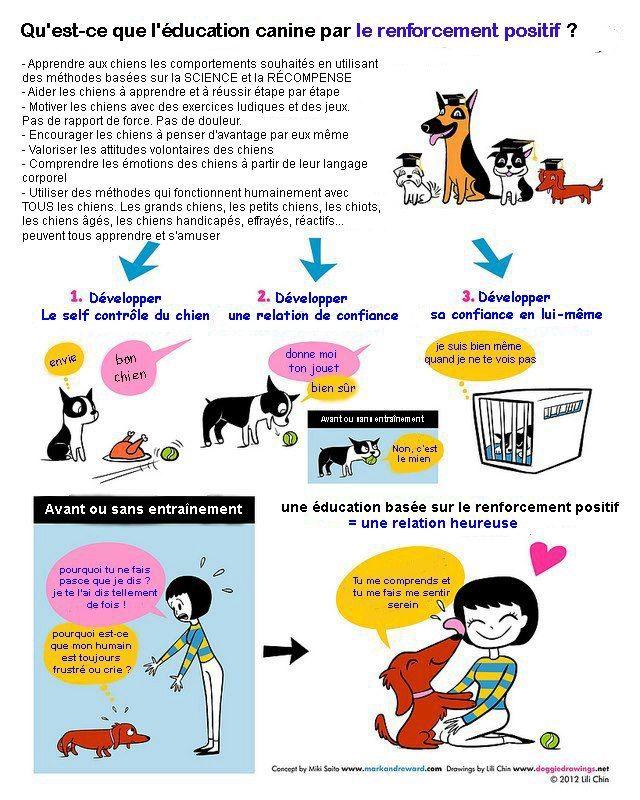 Qu'est-ce que le renforcement positif en éducation canine?