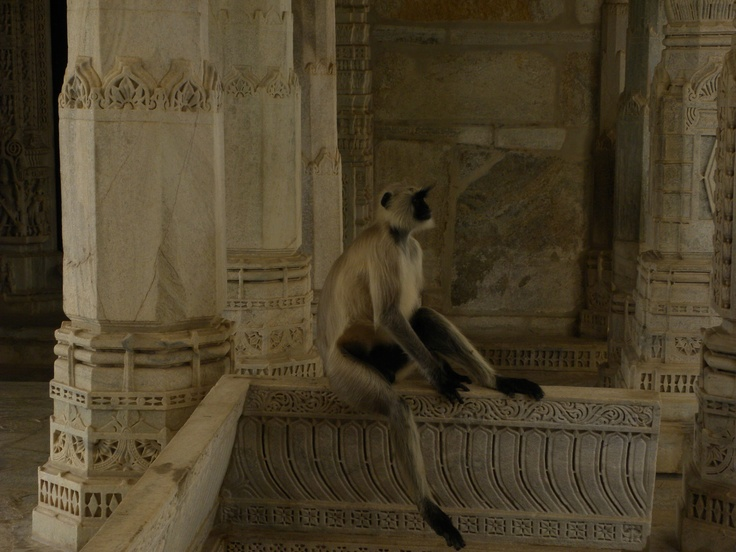 Monkey in a Gianist Temple - Ranakpur, India