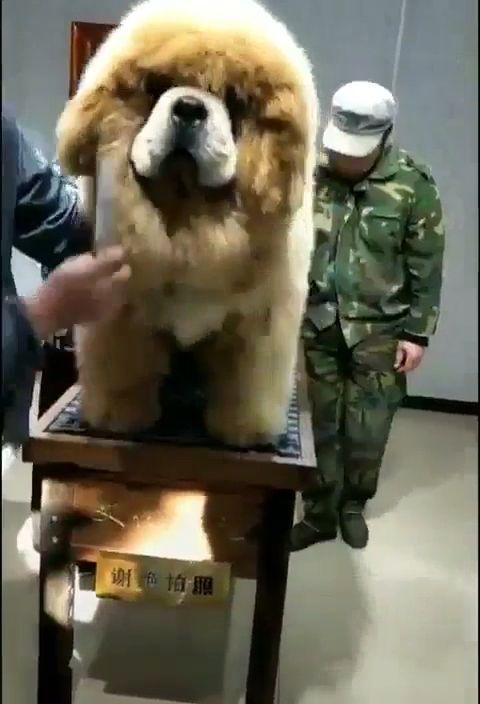 Fluffy Dog Who Else Need That Dog ❤️