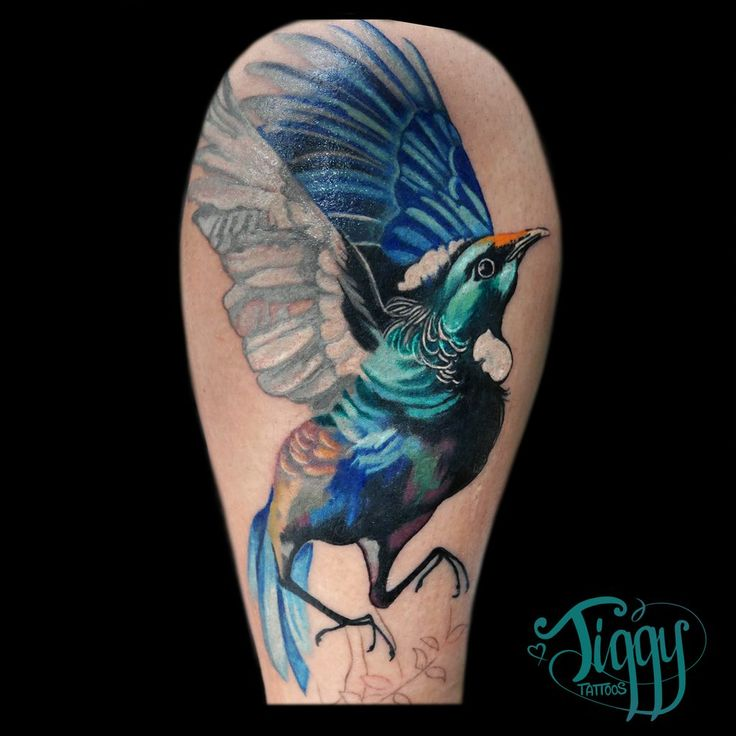 117 best images about tuis fantails for tattoo inspiration on pinterest trees crafts and. Black Bedroom Furniture Sets. Home Design Ideas