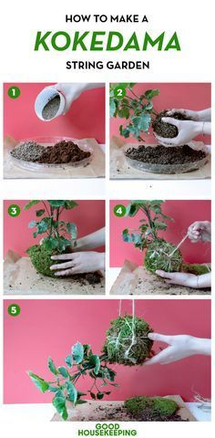 """Kokedama, which literally means """"moss ball"""" in Japanese, are a type of bonsai that not only look adorable but also are an easy DIY project to tackle in one afternoon. We had Robynne Heymans and Mike Madden, owners of Embark Garden, a New York-based plant design company, share their tips for how to make these hanging planters in five simple steps."""