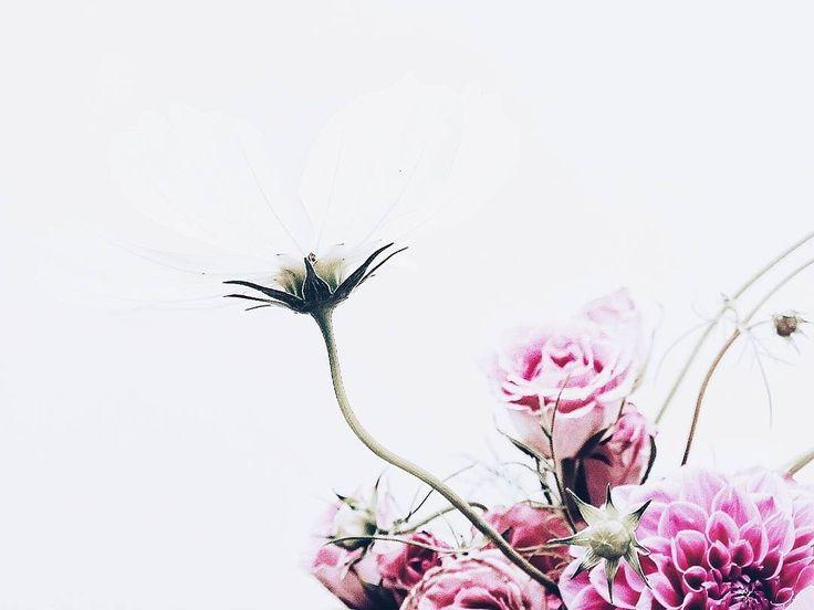Ideal f r a g i l e Blumen gehen f r mich immer F r den myfreshflowerfriday von Franzi wohnblock