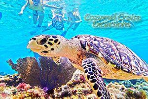 Our Exclusive Cozumel Snorkel Tour has been rated #1 Snorkel tour in Cozumel Mexico. http://cozumelcruiseexcursions.net/snorkel-in-cozumel.html You may read our guide on what to do in Cozumel here: http://cozumelcruiseexcursions.net/what-to-do-in-cozumel.html