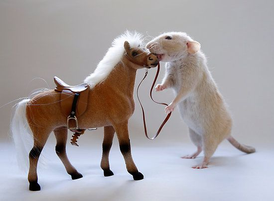 Image result for rats and horses can't vomit