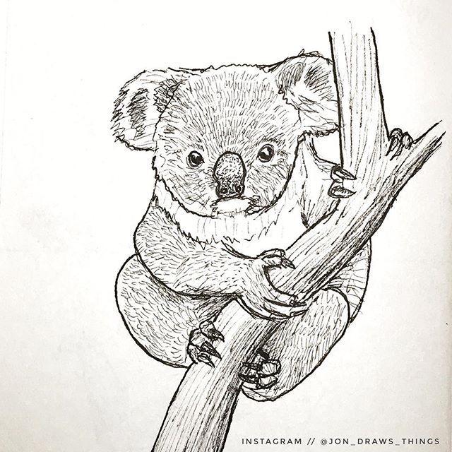 Drawing Prompt No 49 Koala 300drawingprompts Koala Drawing Animal Doodles Animal Drawings