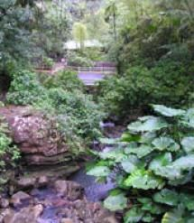 Getting Married: Puerto Rico Wedding Locations: El Yunque