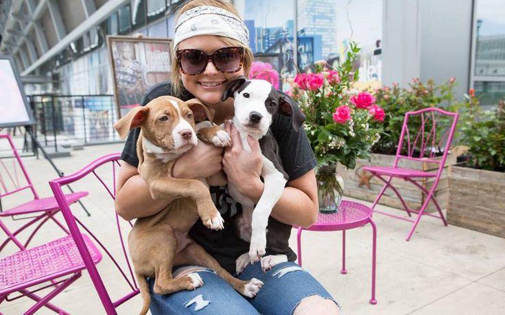 Blake Shelton and Miranda Lambert Divorce was Due to Dogs and Having Babies