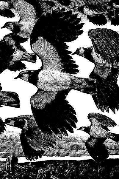 Lapwings for The Sky's Their Highway, 1938,  Charles Tunnicliffe, wood engraving