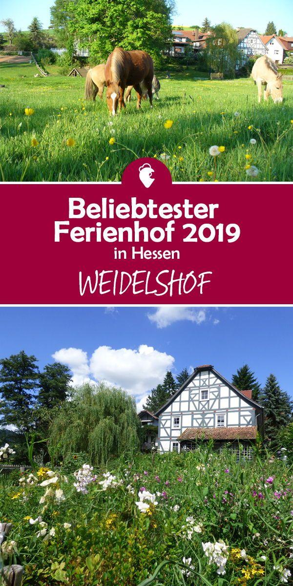 Beliebtester Ferienhof 2019 In Hessen Ist Der Weidelshof Urlaub In Hessen Ferien Mit Kindern Urlaub Reisen
