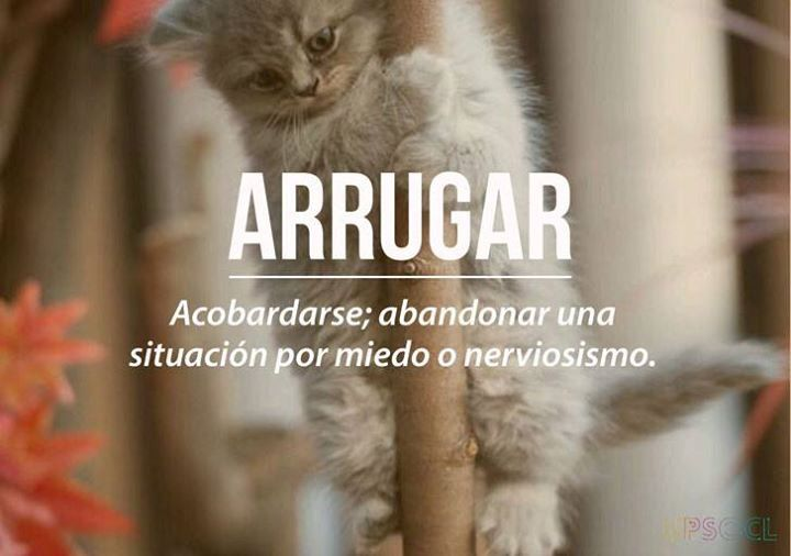 Chilean Slang: Arrugar